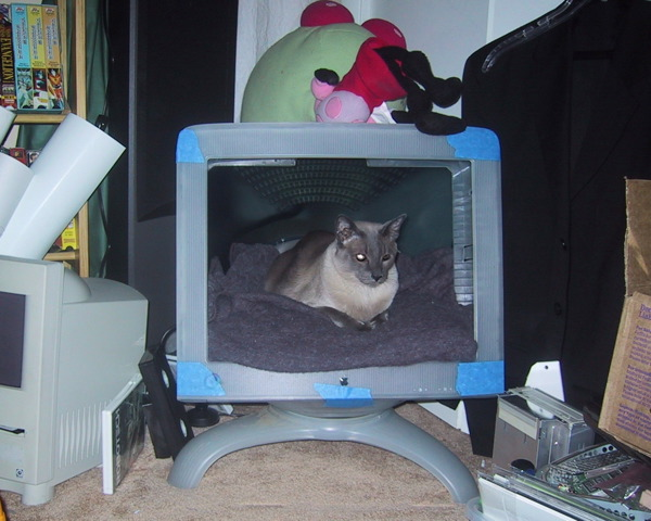 Magic Monitor Kitty Hut